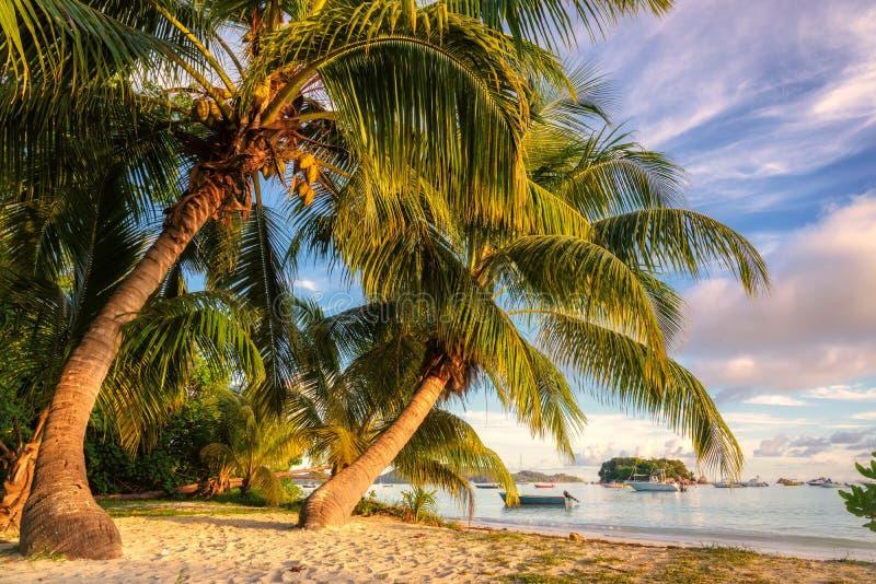 Palmy przy wschodem słońca, Anse Volbert plaża na Praslin wyspie zdjęcie royalty free
