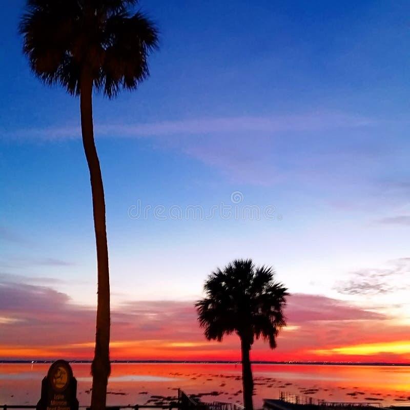 palmy solnedgång royaltyfri bild