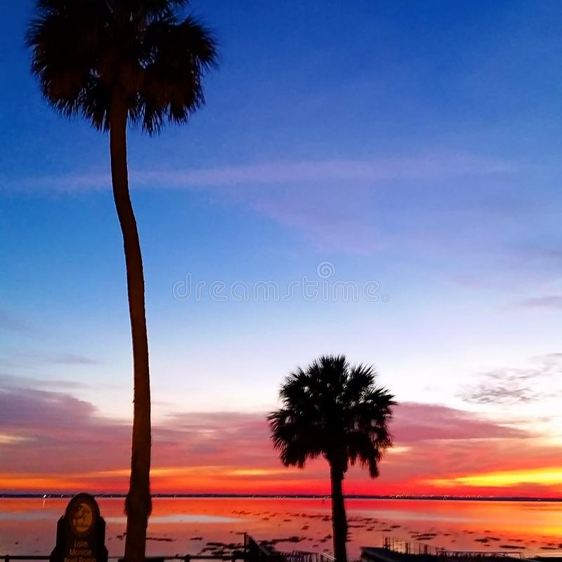 Palmy sunset royalty free stock image