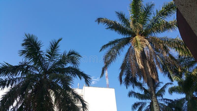 palmy tropikalne fotografia royalty free