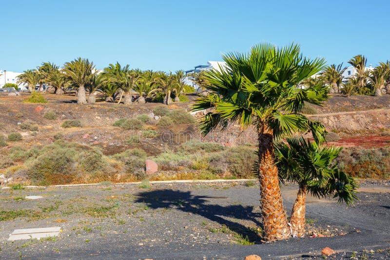 palmy tropikalne obraz stock