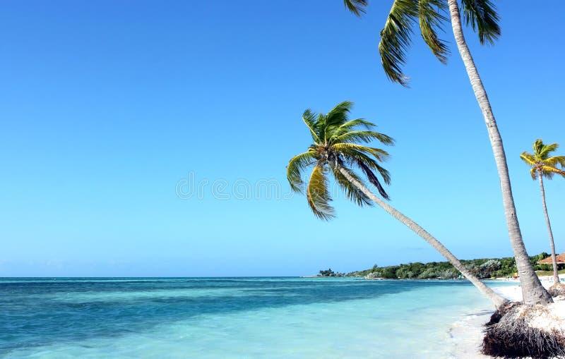 palmy trzy obraz stock