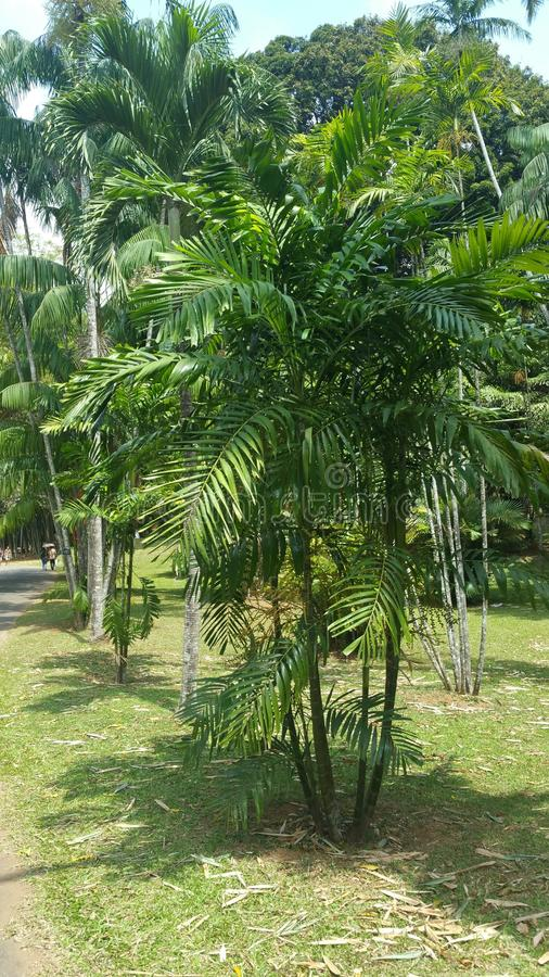 palmy royalty-vrije stock foto