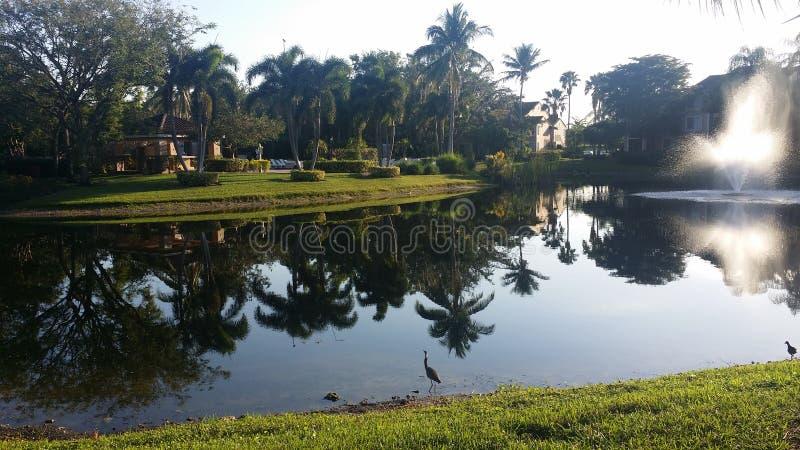 Palmy w jeziorze zdjęcie royalty free