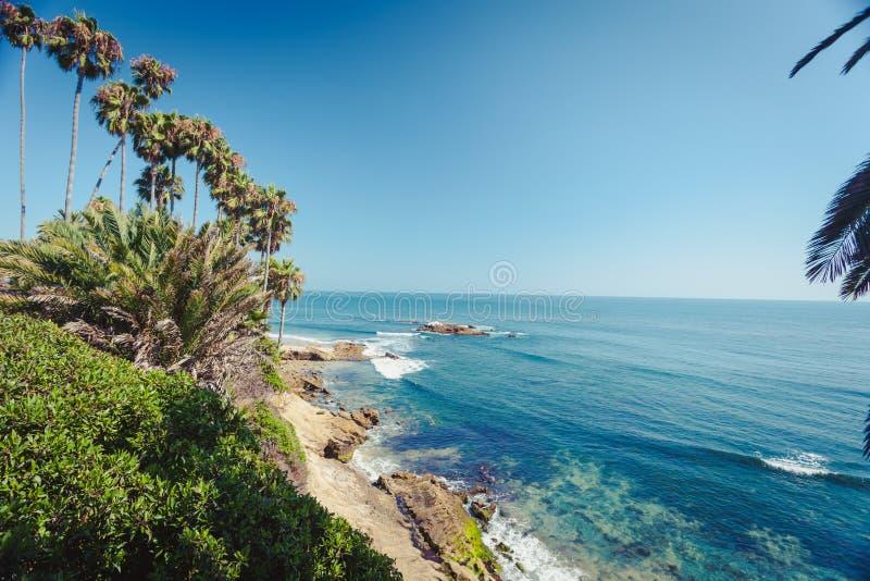 Palmy w laguna beach Kalifornia zdjęcie stock