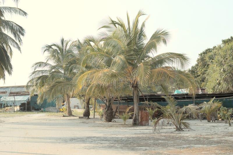 Palmy w maldivian schronieniu zdjęcie royalty free