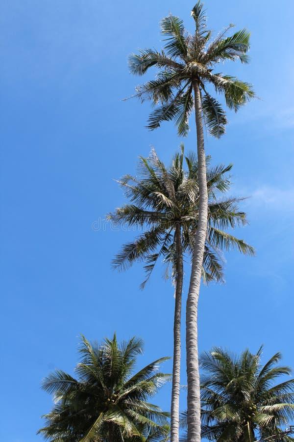 Palmy współzawodniczą w wzroscie obraz stock
