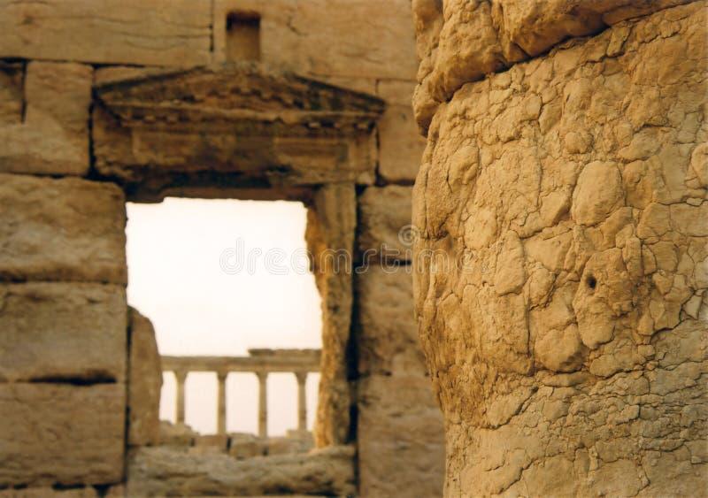 palmyra колонок стоковая фотография