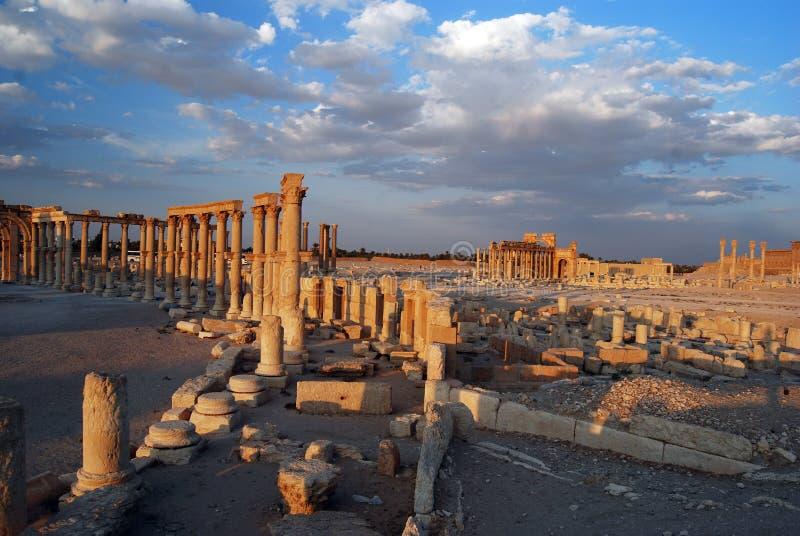 Palmyra fotografia de stock royalty free