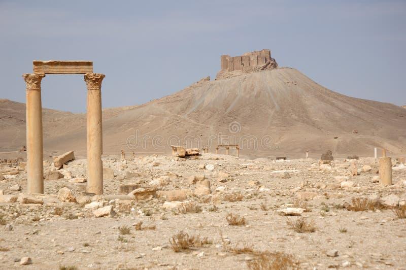 Palmyra fotos de archivo