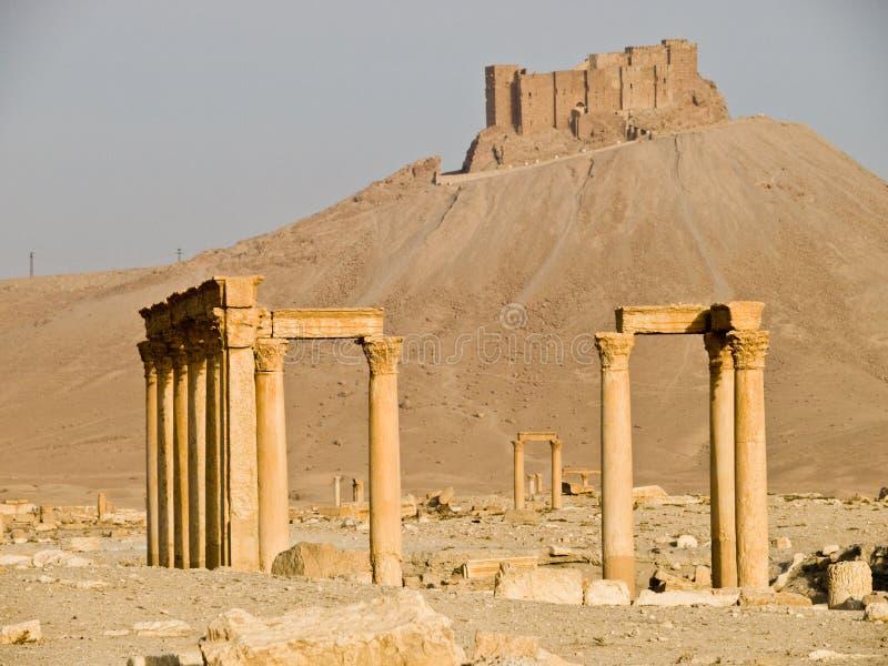Palmyra foto de archivo libre de regalías