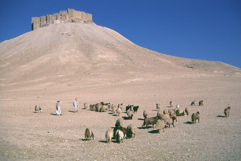 Palmyra 4 de Siria fotos de archivo