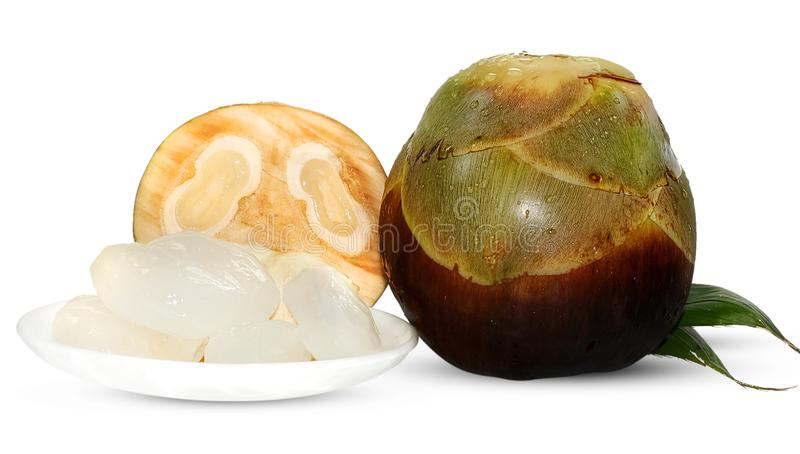 Palmyra palm, Toddy palm or Sugar palm Fruit isolated on white royalty free stock image