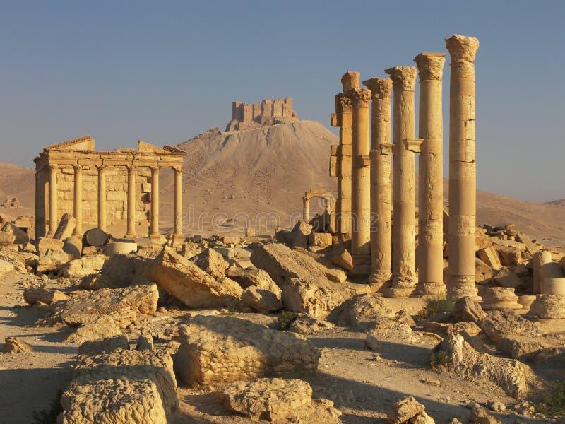 palmyra syria royaltyfri foto