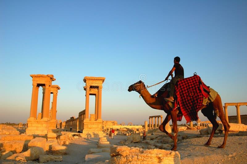 Palmyra Syrien stockfotos