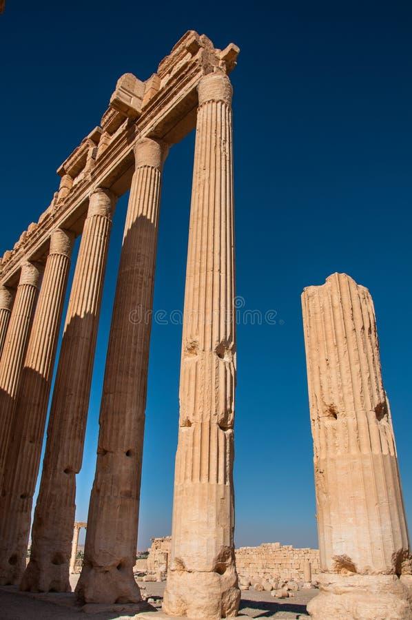 Palmyra Syrien arkivfoto