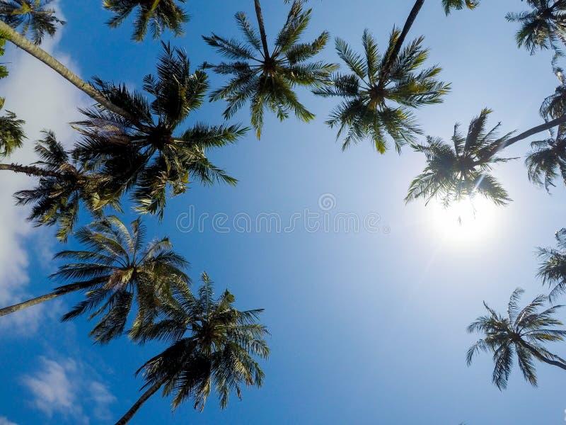 Palmzonneschijn stock afbeeldingen