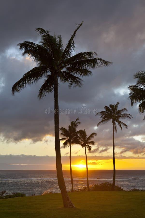 Palmzonsondergang op Napili-Punt, Maui stock fotografie
