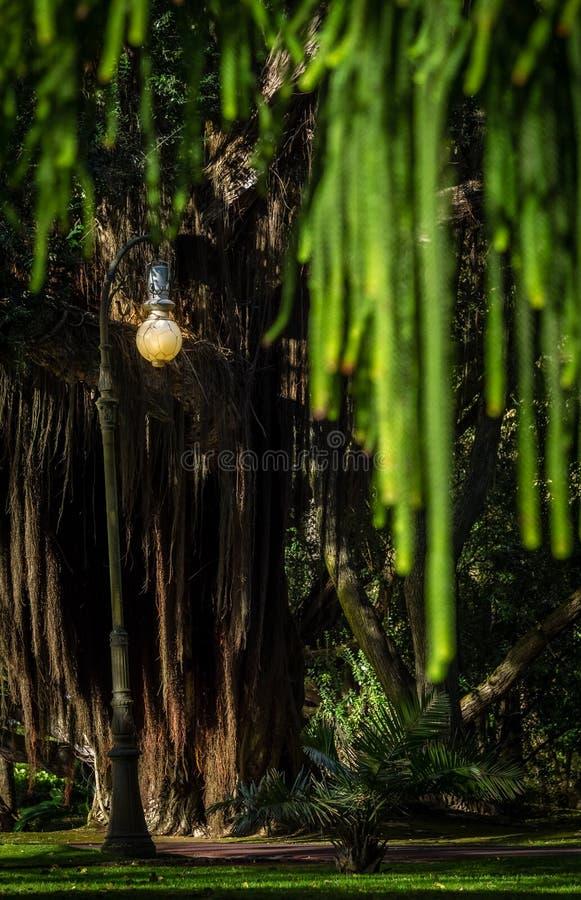 Palo della luce in un parco fotografia stock