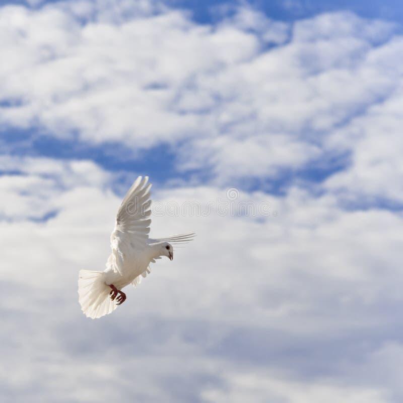 Paloma autoguiada hacia el blanco en el cielo fotografía de archivo