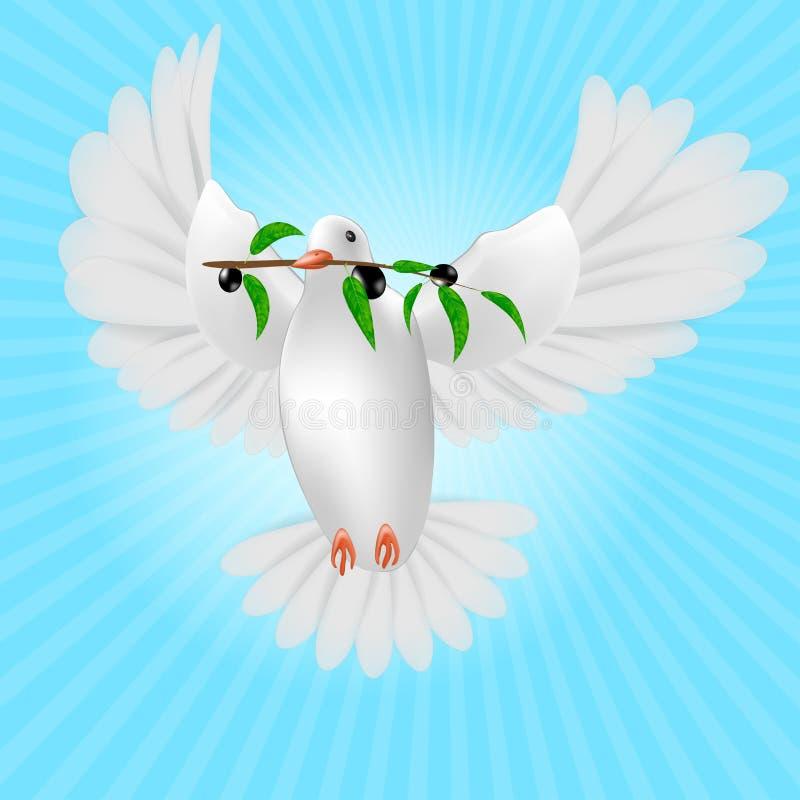 Paloma blanca con la rama de olivo libre illustration