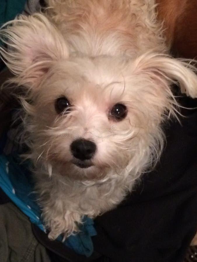 Paloma mi perro fotos de archivo