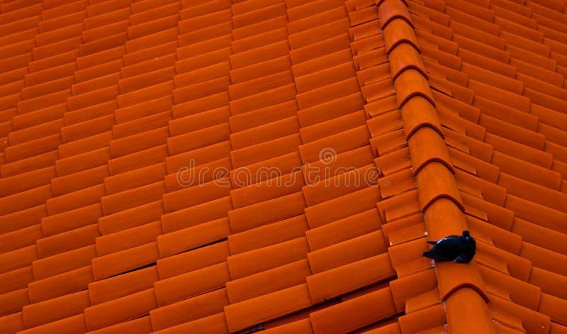 Paloma que se sienta en el tejado rojo Ciudad vieja en Dubrovnik fotografía de archivo