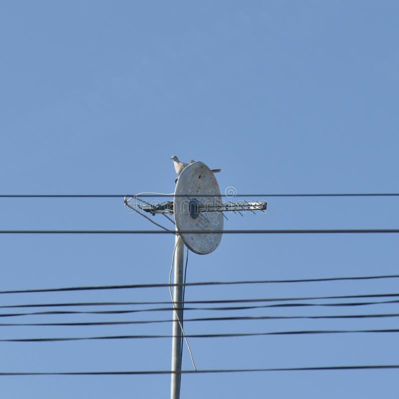 Paloma sola en la antena de televisión fotos de archivo