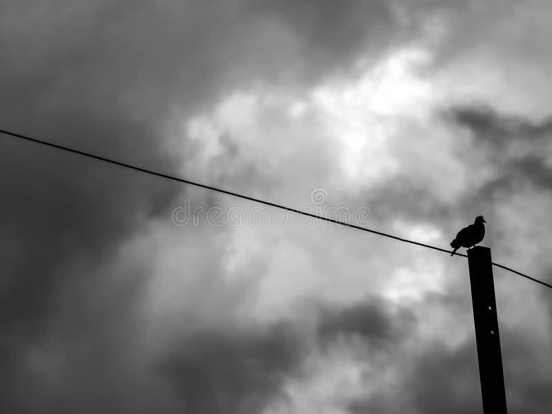 Paloma solitaria de la silueta que se coloca en la columna de acero imagen de archivo libre de regalías