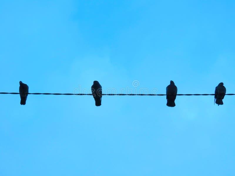 palomas imagen de archivo
