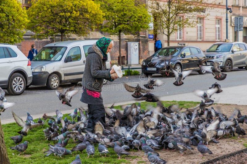 Palomas de alimentación de una mujer en Kraków Polonia foto de archivo