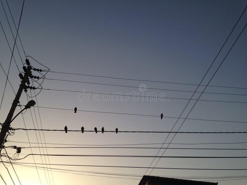 Palomas en-cableado en-UNO Amanecer Guatireño stockfotos