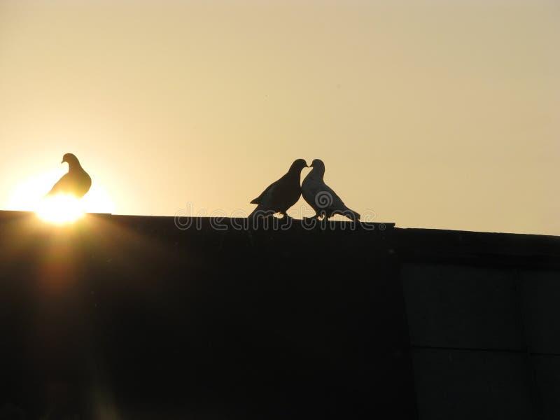 Palomas en la puesta del sol imagen de archivo