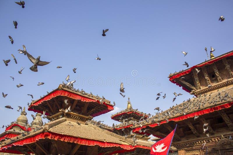 Palomas grises que se sientan en los tejados rojos de templos asiáticos antiguos con la bandera nepalesa y que vuelan contra un c fotos de archivo libres de regalías