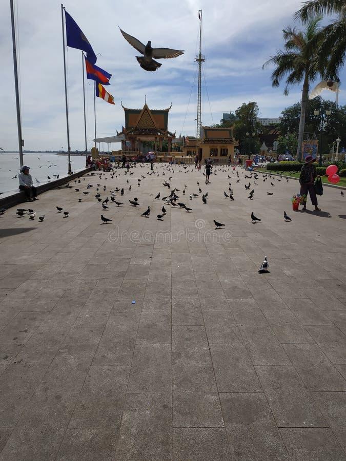 Palomas a lo largo de la orilla del río fuera del palacio presidencial en Phnom Penh Camboya imagen de archivo libre de regalías