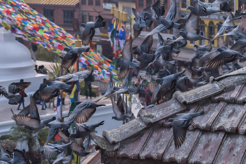 Palomas que vuelan el viaje Nepal de Bouddhanath imagenes de archivo