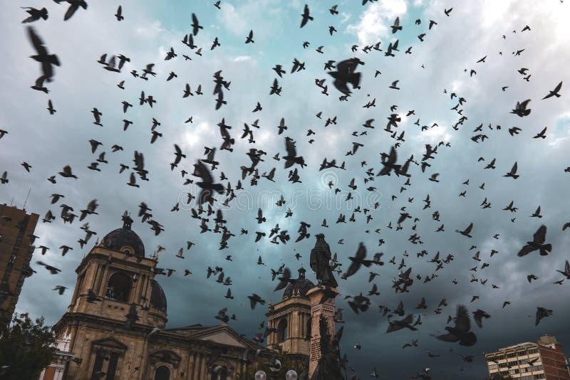 Palomas que vuelan sobre la plaza Murillo en Bolivia fotografía de archivo libre de regalías