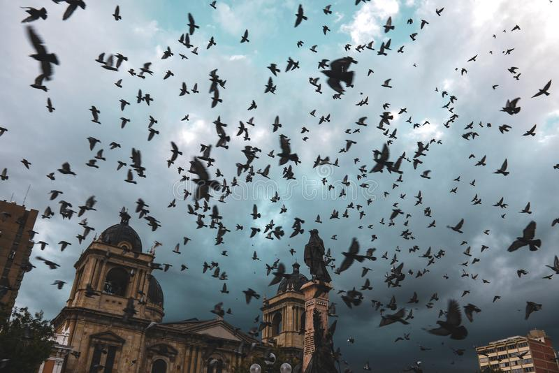 Palomas que vuelan sobre la plaza Murillo en Bolivia imagen de archivo