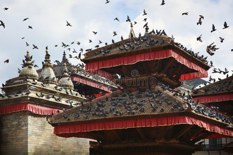 Palomas sobre Patan fotografía de archivo libre de regalías