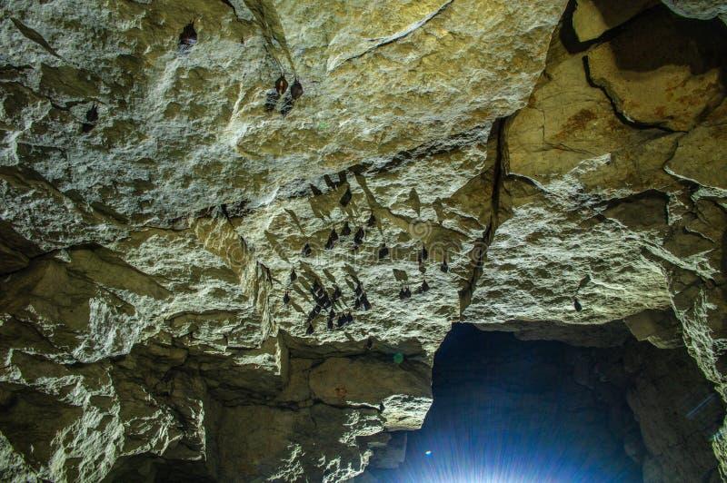 Palos en el techo de la mina imagen de archivo