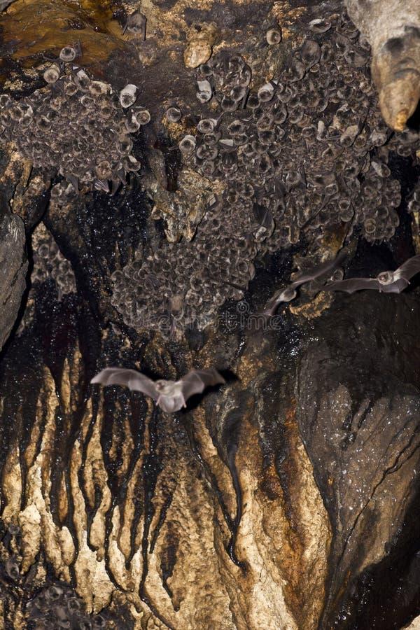 Palos en la cueva fotos de archivo libres de regalías