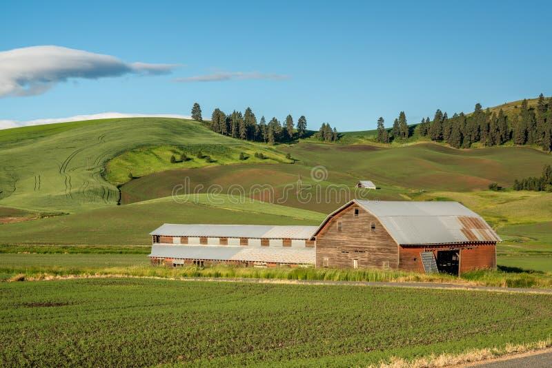 Palouse农场和谷仓有绿色领域的 免版税库存图片
