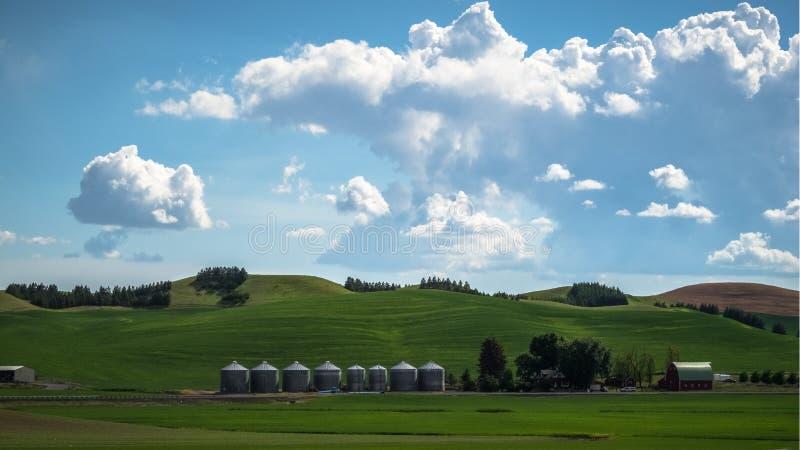 Palouse的麦子农场 免版税库存图片
