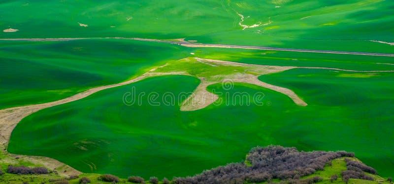 Palouse领域 库存图片