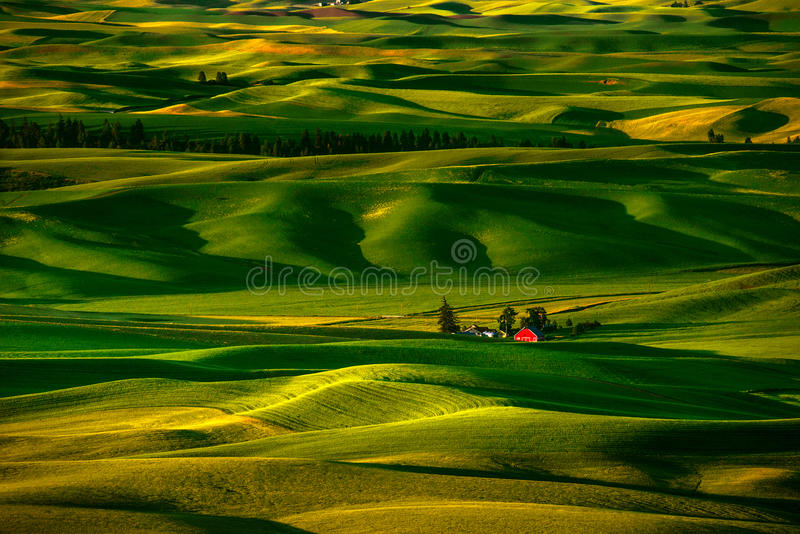 Palouse Hills in the Morning. Glow under the sun light royalty free stock image