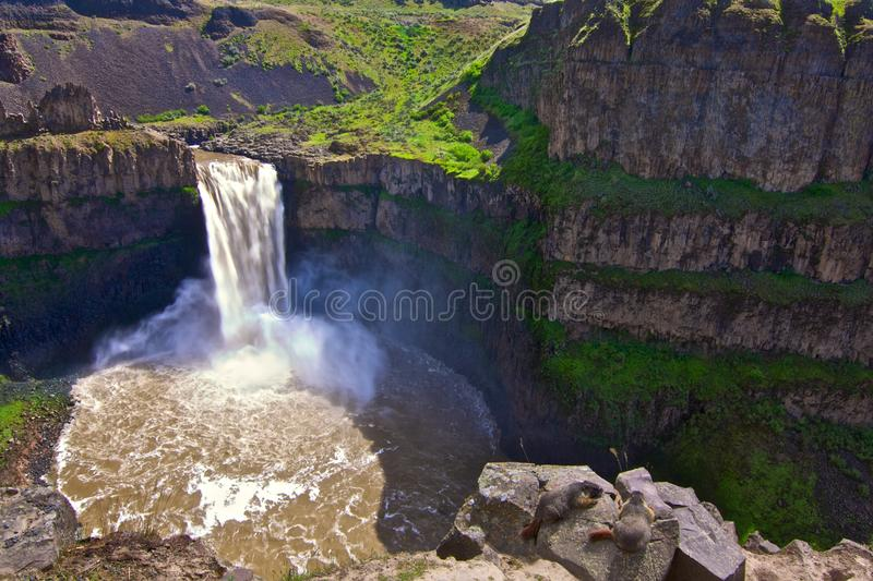 Palouse Waterfalls With Yellow Bellied Marmots Stock Photo