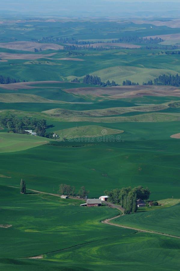 Palouse wheat fields stock photo