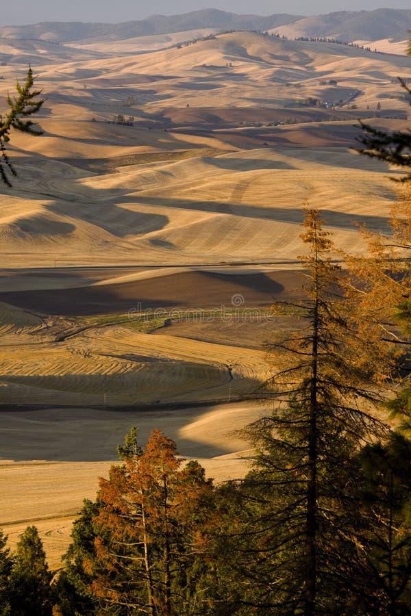 Palousevallei, oostelijk Washington State royalty-vrije stock fotografie