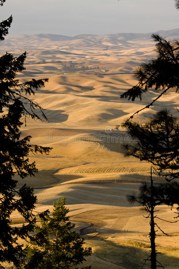 Palousevallei, oostelijk Washington State stock fotografie