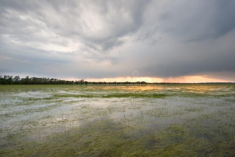 Palude con le nubi tempestose fotografia stock libera da diritti